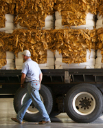 Man walking past truck loaded with bundles of tobacco leaves